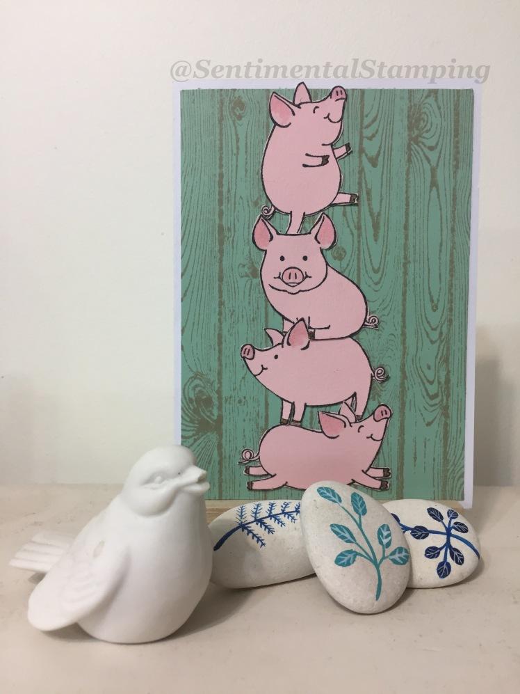 pile of pigs.JPG