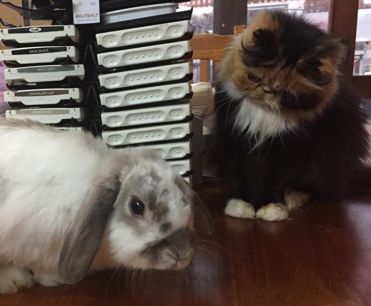 Spud & Gizmo