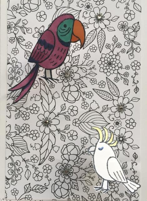 bird banter just add colour